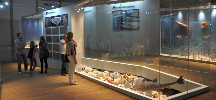 Galeria Ziemi-ekspozycja stała w Centrum Geoedukacji_fot. Archiwum Geoparku Kielce