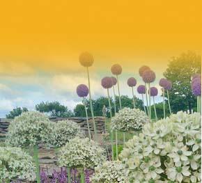 kafelek ogród 2